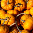Long Stem Pumpkins — Stock Photo