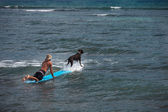 Dog Surfing with Man — Stock Photo