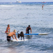 Friends Surfing with a dog in Hawaii — Stock Photo #16804117