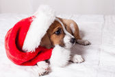 Profile view of a Cute Christmas Puppy — Stock Photo