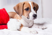 Very Cute Christmas Puppy — Stock Photo