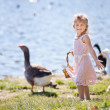 Pretty girl with Ducks and geese — Stock Photo #44500933
