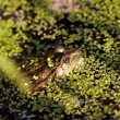 Gross frog on nature in green marsh, closeup, horizontal photo - Stock Photo