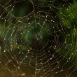 Spiderweb - Stock Photo
