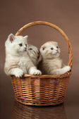 Fluffy little kittens — Stock Photo