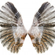 Stock Photo: Wings