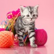 Stock Photo: Kitten