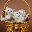 Stock Photo: Kittens