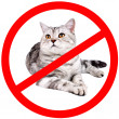 Cat forbidden — Stockfoto