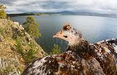 Bird above sea — Stock Photo