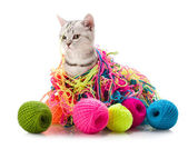 Kitten  with  many multi-coloured clew — Stock Photo