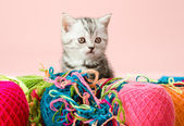 Kitten with multi-coloured clew — Stock Photo