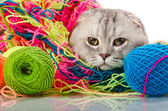 Cat with  many multi-coloured clew — Stock Photo