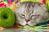 Cat and multi-coloured clew — Stock Photo