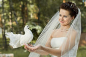 Fiancee with white  pigeon — Stock Photo