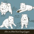 Vintage set with samoyed puppies. — Stock Vector