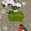 Christmas card with bullfinch. — Stok Vektör