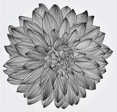 Bläck ritning av svart dahlia blomma, element för din design — Stockvektor