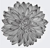 Ink drawing of black dahlia flower, element for your design — Vector de stock