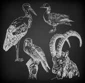 Digital drawing of stork, falcon, goose and goat — Stockvektor