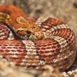 Snake basking in the spring of suns — Stock Photo