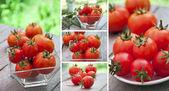 Collectie van verse tomaat — Stockfoto