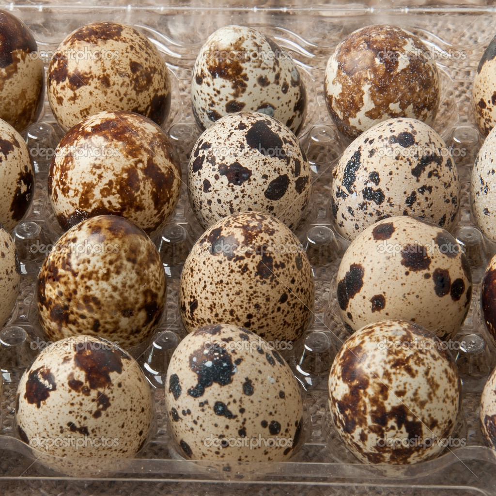 Quail eggs in the container — Stock Photo #14281165