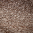 Fur texture — Stock Photo