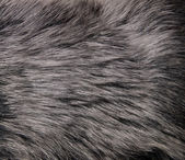 Close up shot of abstract fur background — Stock Photo