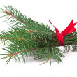 Green pine branch with red bow on a white background — Stock Photo