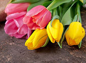Bouquet of tulips on old wooden background — Stock Photo