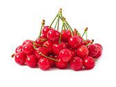 Cherry isolated on white background — Stock Photo