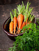 Bunch of fresh carrots — Stock Photo