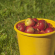 Crop of apples — Stock Photo