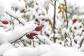 Počátkem zimy — Stock fotografie