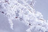 Cuento de hadas de hielo — Foto de Stock
