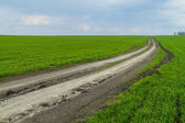 Road to a field — Stock Photo