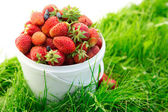 Ripe strawberry in bucket on grass — Stock Photo