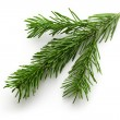 Twig of evergreen fir on white — Stock Photo #14514769