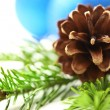 Twig of evergreen fir and cone — Stock Photo #16495369