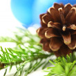 Twig of evergreen fir and cone — Stock Photo