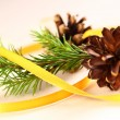Twig of evergreen fir and cone with ribbon — Stock Photo #16637473