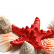 Stock Photo: Seastar and seashells on white