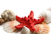 Seastar and seashells on white — Stock Photo