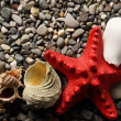 Seastar and seashells on pebbles - Stock Photo
