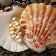 Stock Photo: Scattering white pearls in seashell