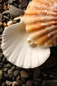 White pearl in seashell on pebbles — Stock Photo