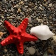 Seastar and seashells on pebbles — Stock Photo