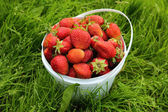 Ripe strawberry in basket on grass — Stock Photo