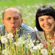 Young couple lying on grass in the field of dandelion — Stock Photo